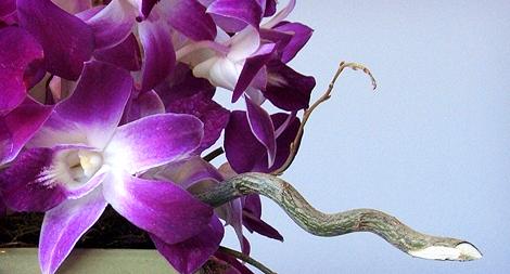 08-08-09_Orchids2