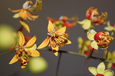 08-10-07_Plant
