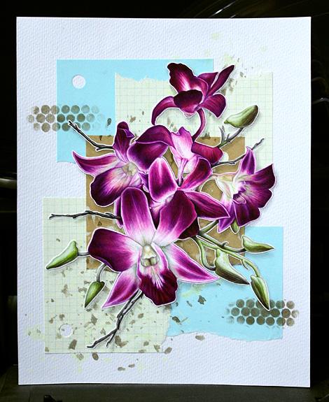08-10-09_Orchids_C2