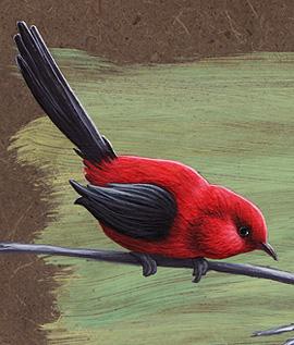 08-10-28_C3_Bird1