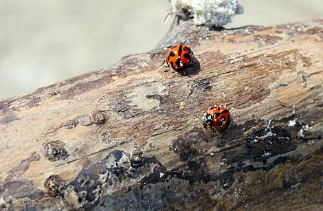 08-11-27_Beetles