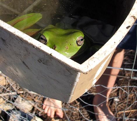08-12-03_frog