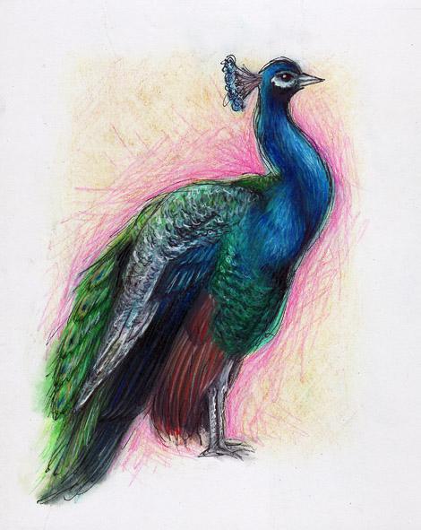 08-12-11_Peacock