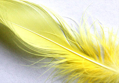 09-04-13_Feather1