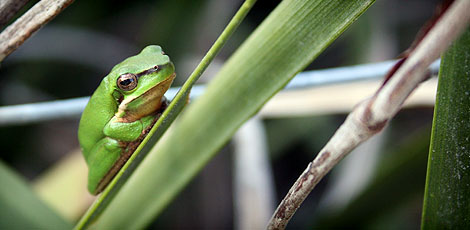 09-09-22_Frog5
