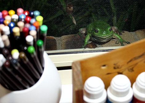 09-11-06_Frog