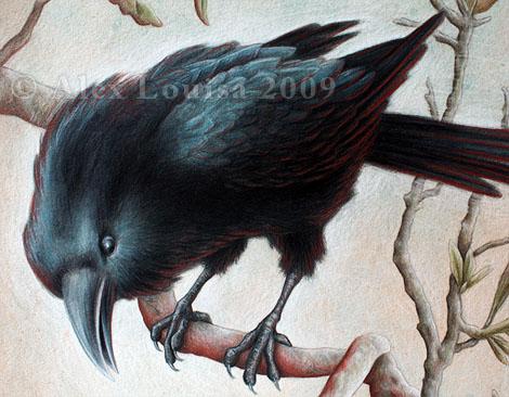 09-12-01_TK2_crow