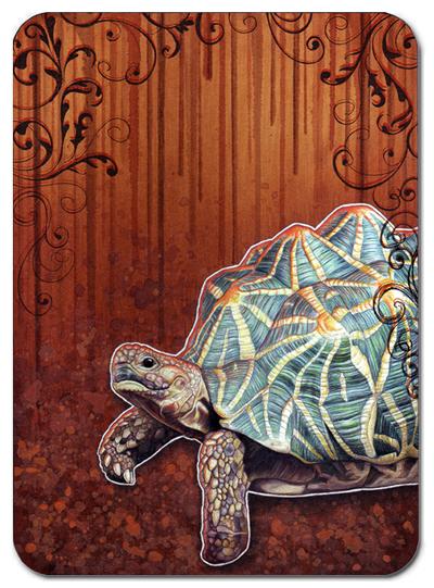 Alextebb_tortoise1_2